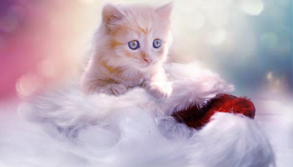 Vaša-nova-maca
