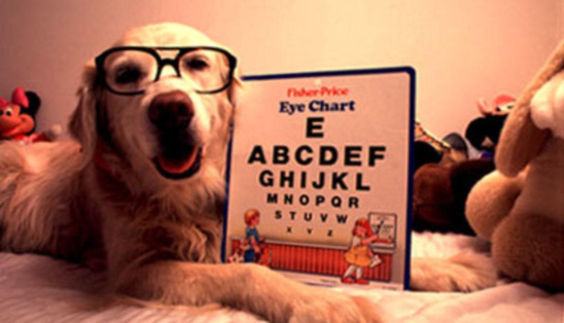 Kako da čistite oči Vašem psu