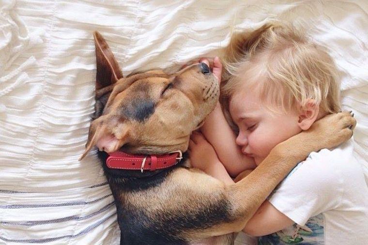 Kako da zaštite Vašeg kućnog ljubimca