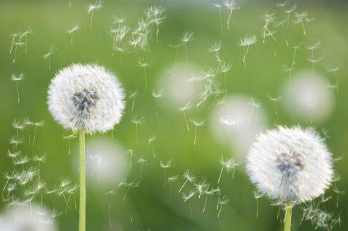 Alergije iz okruženja