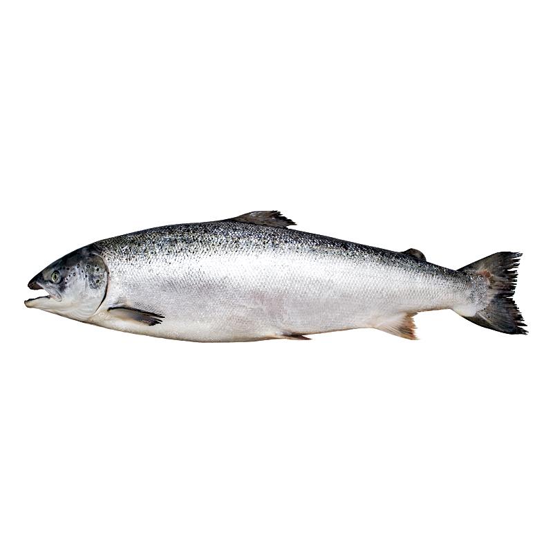 Ulje lososa